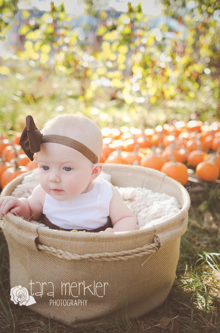 Web Kyleigh Pumpkin Mini Session Tara Merkler Photography-16