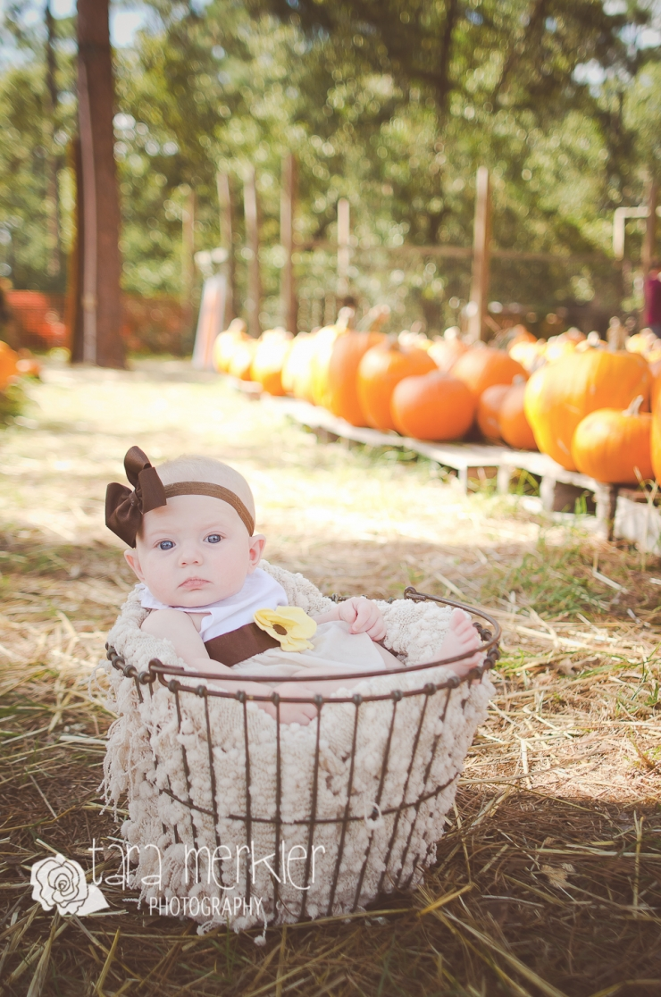 Web Kyleigh Pumpkin Mini Session Tara Merkler Photography-5