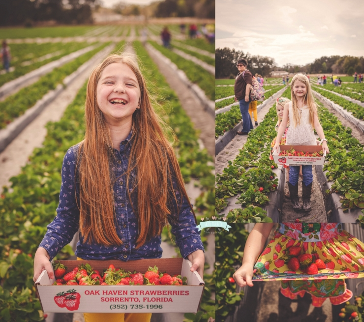Merkler Strawberry picking in Central Florida Children